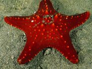 Star-fish 723 600x450