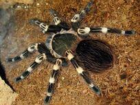 Spider2a