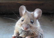 Cute mouse-8551