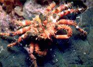 Deco-crab3