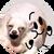 Plump Dog TeamIcon