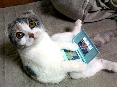 NDS cat