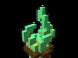 Cave Kelp