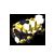 Jeweled Jaegerhelm small