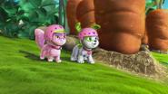 Custard and Pupcake with helmets