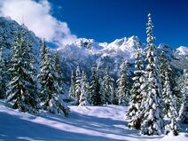 Winter-wallpaper-10