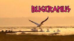 Bugeranus Tribe