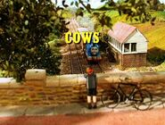 CowsTitleCard