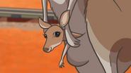 Thomas'KangarooAdventureinAustralia28