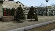 TreeTrouble31