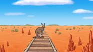Thomas'KangarooAdventureinAustralia9