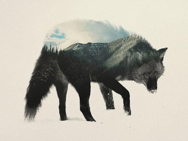 File:Wolfwolfing.jpg