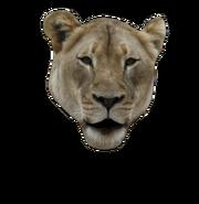Lion-open