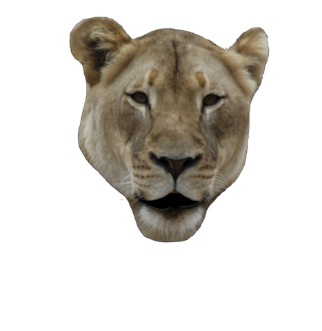 File:Lion-open.png