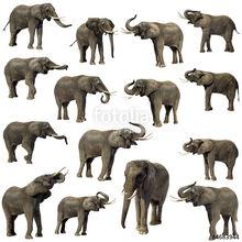 15 Elephants