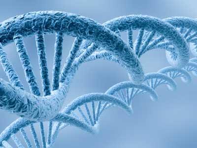 File:Genes.jpg