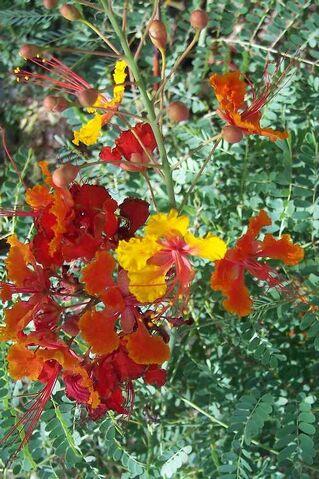 File:Flowers.jpg