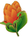 Andaman Insignia
