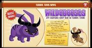 Wildebeest (News)