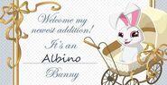 Albino bunny displayed on facebook as an award!!