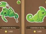 Chameleon Bunny