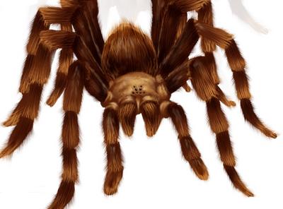 J'ba Fofi Spider