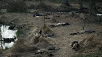 Benjamin Tallmadges' soldiers bodies