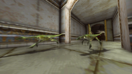 Turok 2 Seeds of Evil Enemies - Compsognathus - Dinosaurs (21)