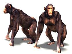 Chimpanzee Render