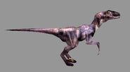 TE Raptor01