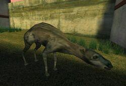 Zoo Animals (PC) (6)