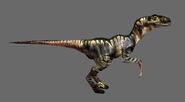 TE Raptor02