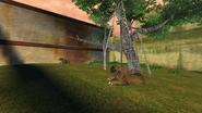 Turok Evolution Wildlife - Saber-Toothed Cat (1)