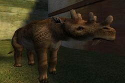 Zoo Animals (PC) (3)