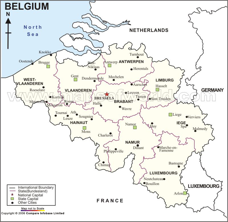 belgium turtledove fandom powered by wikia