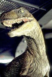 Velociraptorjp