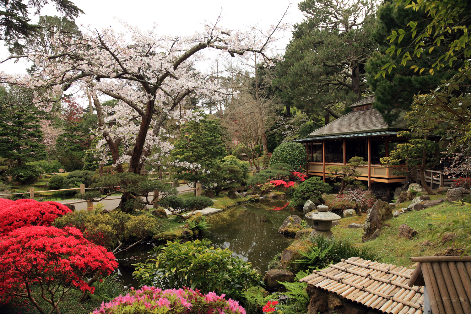 Image - Japanese Tea Garden, San Francisco-1-.jpg | Turtledove ...
