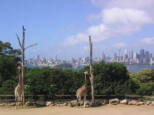 800px-Taroonga Zoo