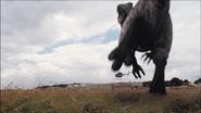Giganotosaurus-17