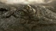 Sarcosuchus-4