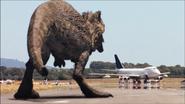 Giganotosaurus-8
