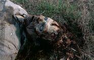 Walking Dead 2x12 004