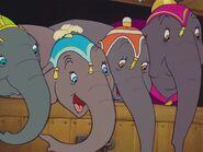 Dumbo 6