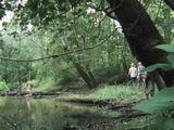 Floresta Pântano