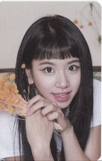 Once Halloween Card Set Chaeyoung