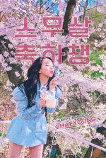 Birthday Chaeyoung 2018