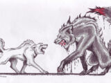 Werewolves vs. Shape-shifters