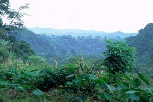 Africa Sourcebook