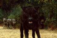 New-moon-wolf-pack-3