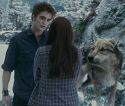 Edward-cullen-gallery
